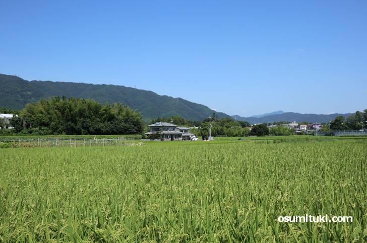 周囲は京都・西山の田園地帯