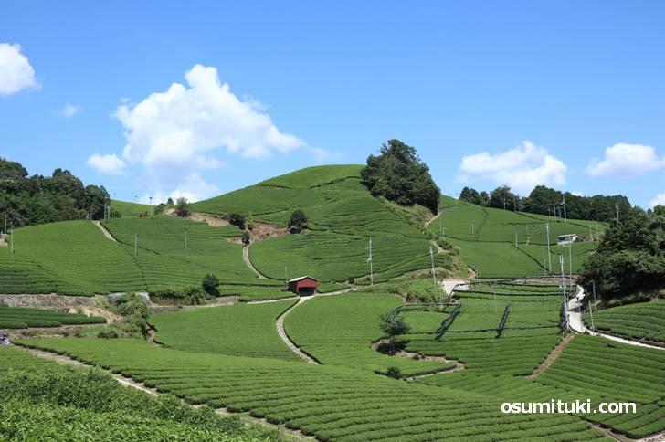 dan dan cafё から見る和束の茶畑は圧巻