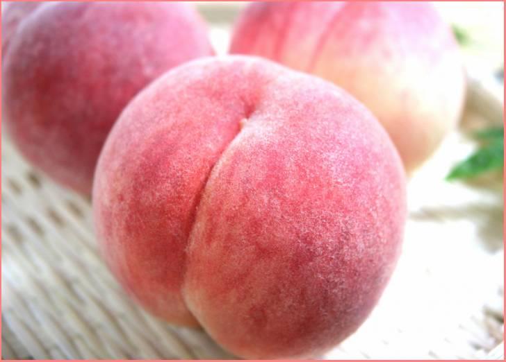 菱沼農園「完熟桃 あかつき & もも蜜」が『満天☆青空レストラン』で紹介