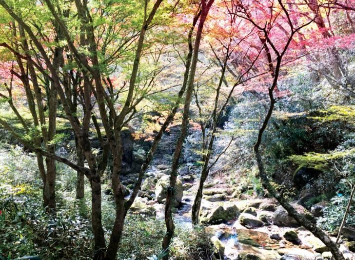 花園・花貫県立自然公園