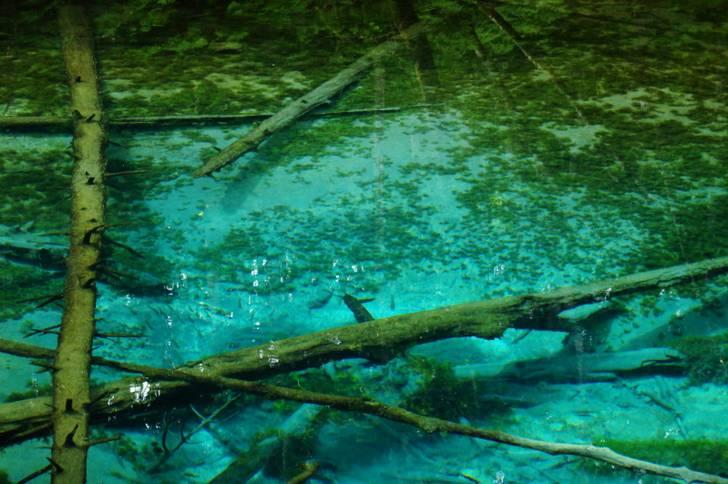 北海道・清里町といえば「神の子池」