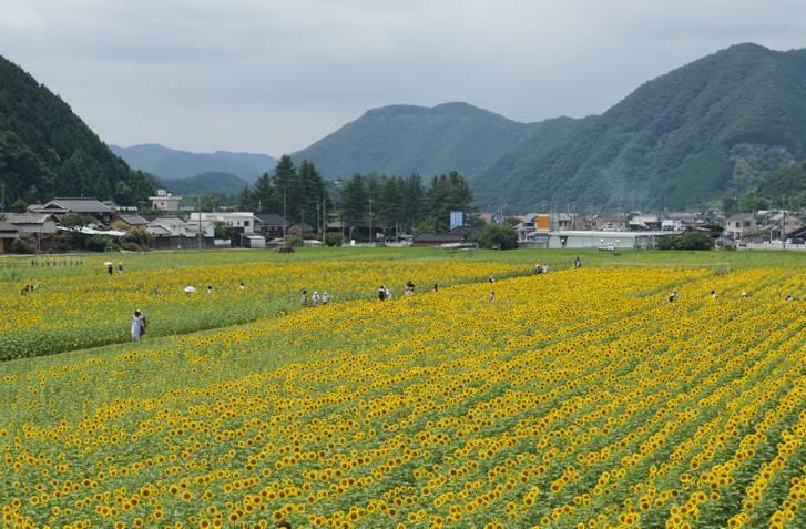兵庫県佐用町の田園風景、自然が豊かな土地で知られている