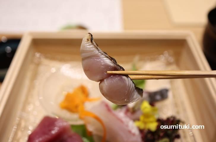 「さごし」はサワラの幼魚のことです
