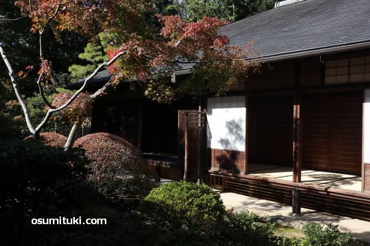 京都は暖冬で紅葉シーズンが2週間ほど遅れています