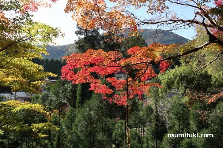 京都の紅葉が見頃になりました(2019年11月19日)