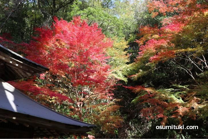 山あいの紅葉が美しい(讃州寺)