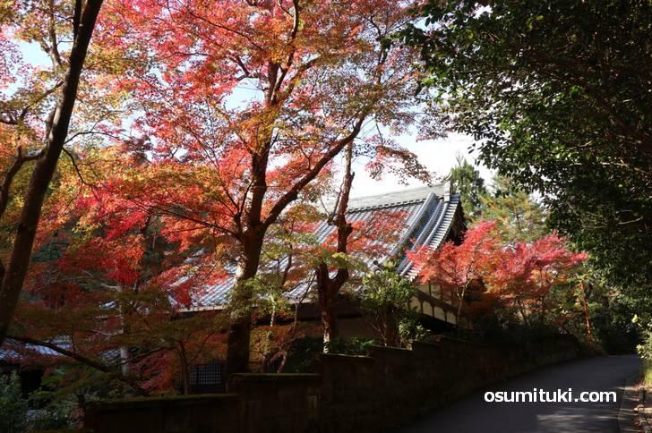 すぐ近くの紅葉名所「吟松寺」もキレイな紅葉でした