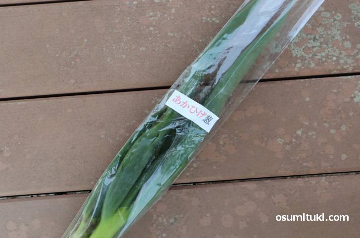 京都・園部町で購入した京都・園部町で買った「あかひげ葱」100円