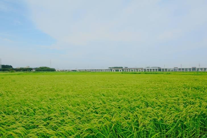 埼玉県伊奈町の田園風景