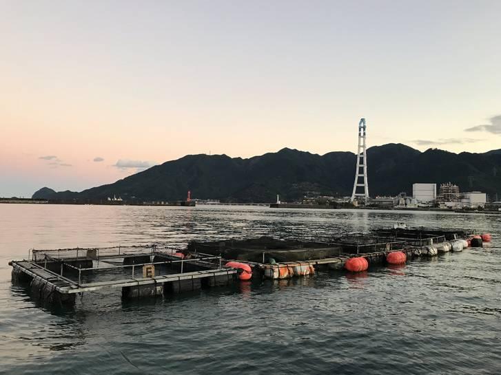 マスカケは尾鷲熊野エリアでも一部の漁村にしか残っていない風習