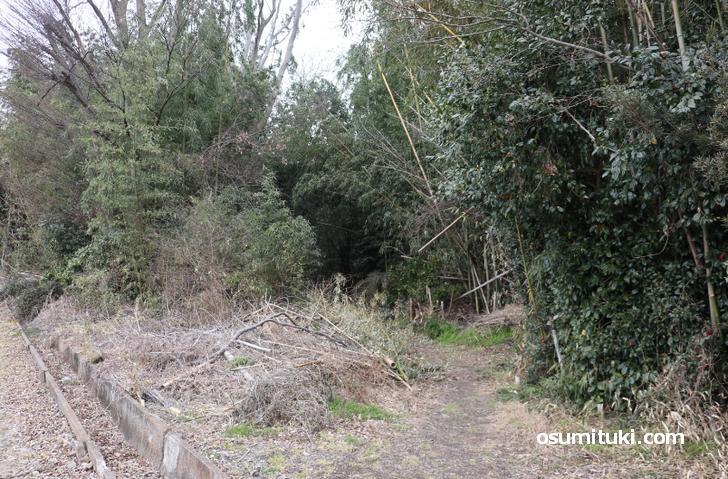 新開の森(シガイの森)の入口