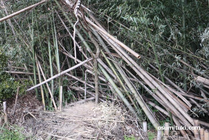 新開の森(シガイの森)は竹林です