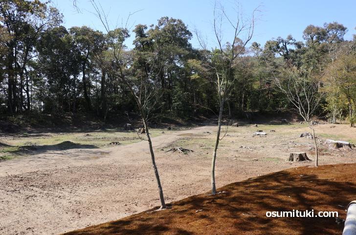 新しい参拝路は「金閣寺・幻の池」の横を通る