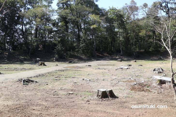 金閣寺・幻の池