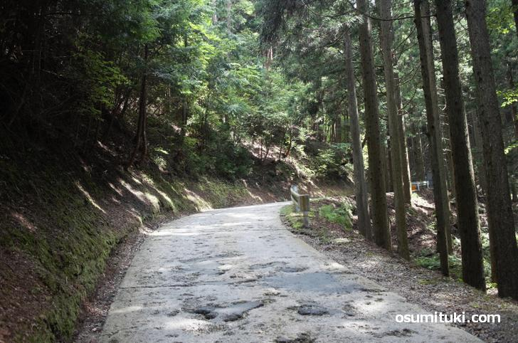 一般道というよりも林道です(国道477号)
