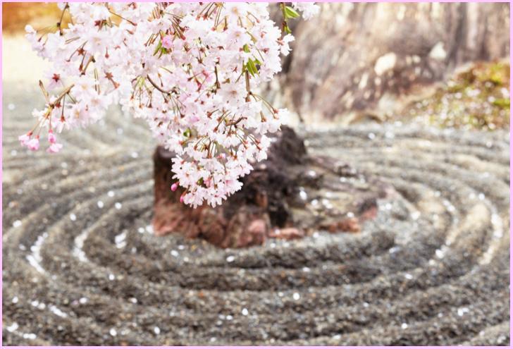 退蔵院の石庭としだれ桜
