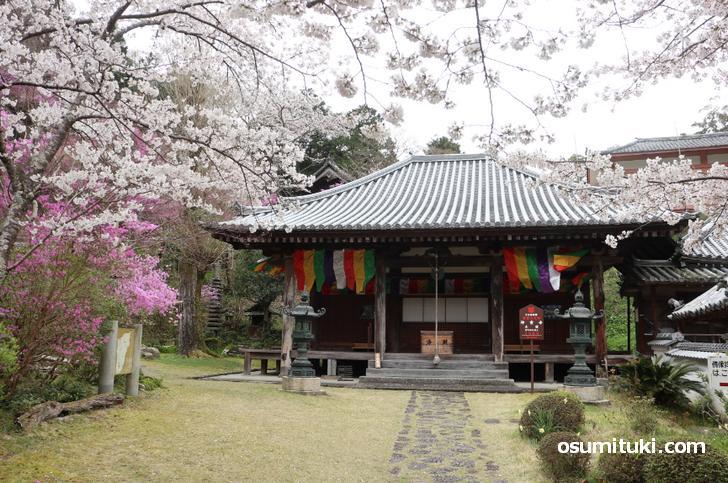 桜の名所「神童寺」の桜