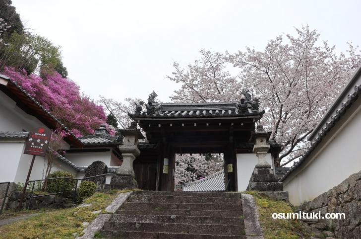 桜の名所「神童寺」へは棚倉駅から徒歩40分ほどかかります