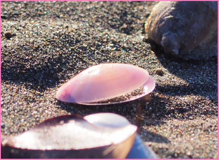 海岸に流れ着いた桜貝、これで貝細工をする上野良助さんが『人生の楽園』で紹介