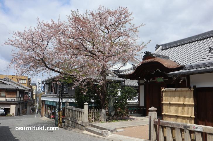 京都・五条坂、土産物店も飲食店も半数以上が営業自粛
