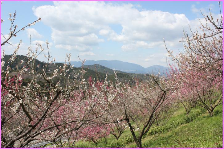 奈良県下市町の風景、実はここに写るアルもので作ったアレが無人販売されています