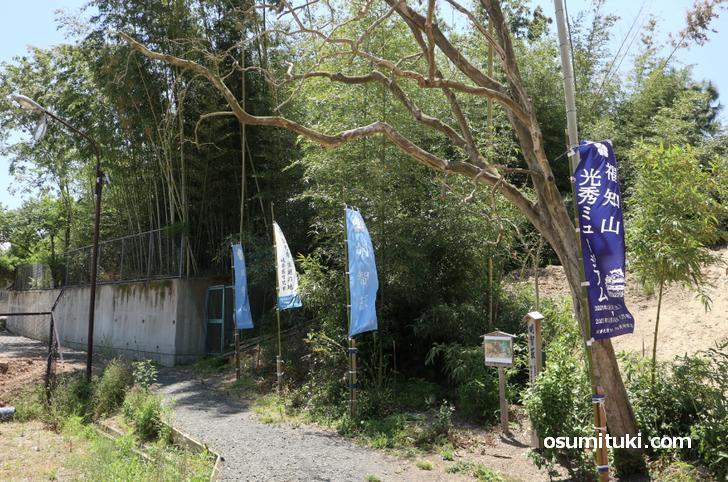 すぐ左隣りには少し大きな竹藪がある