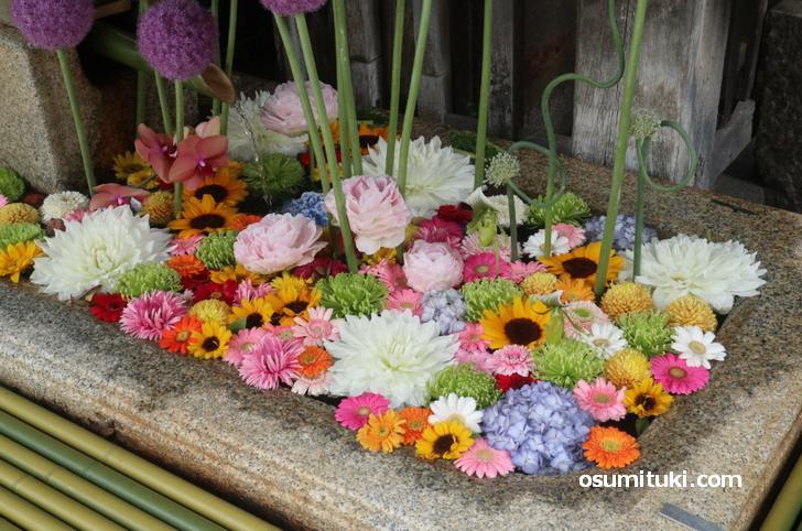 紫陽花、ピンポンマム、芍薬、向日葵など