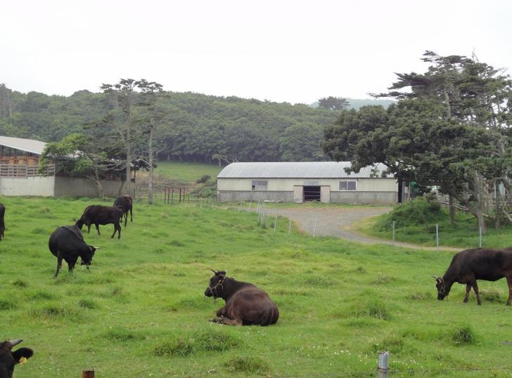 岩手の名産「短角牛」が『満天☆青空レストラン』で紹介