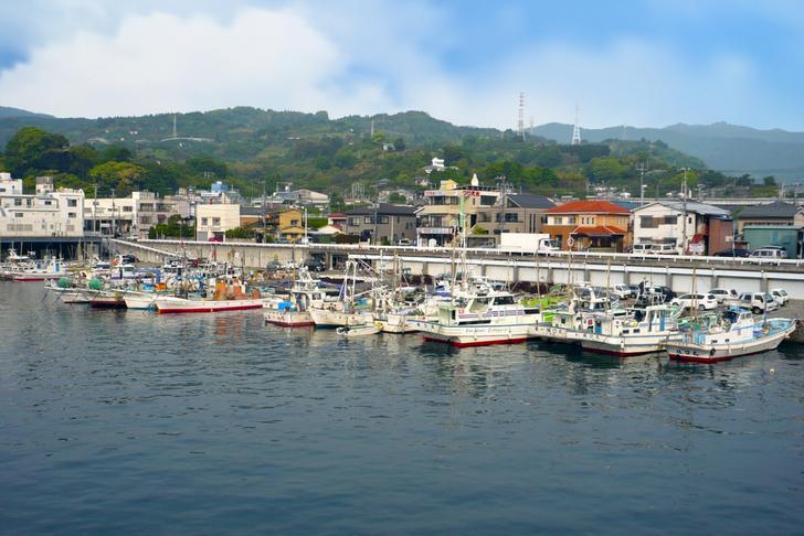 小田原漁港(早川漁港)で養殖される「キャベツウニ」が『満天☆青空レストラン』で紹介