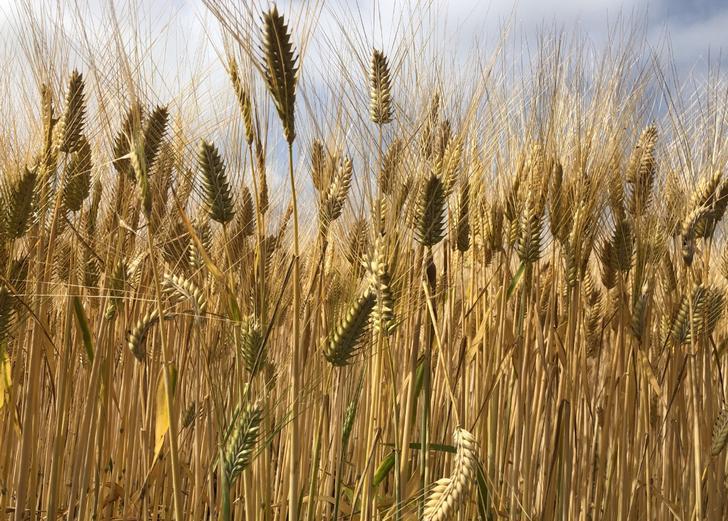 小麦や大豆は海外からの輸入に頼っているのが日本の食糧事情です