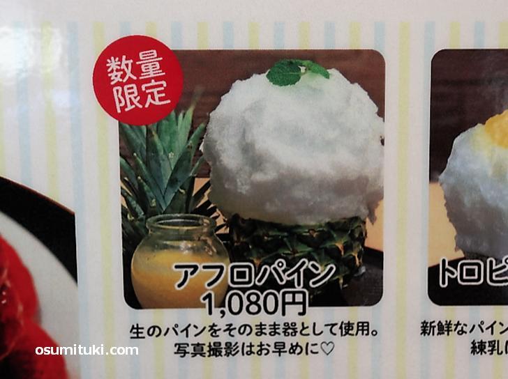 数量限定 アフロパイン(1080円)