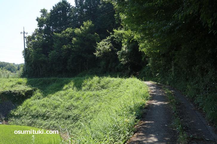 山陰街道の古道から林道へ入る