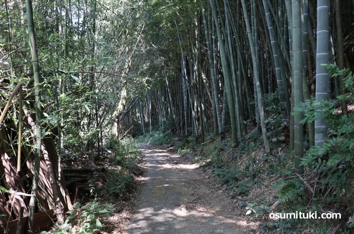 占い石のある道は竹林になっていました