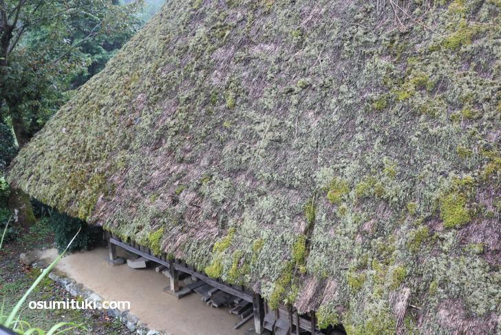 茅葺屋根の上には草が生えており歴史を感じる