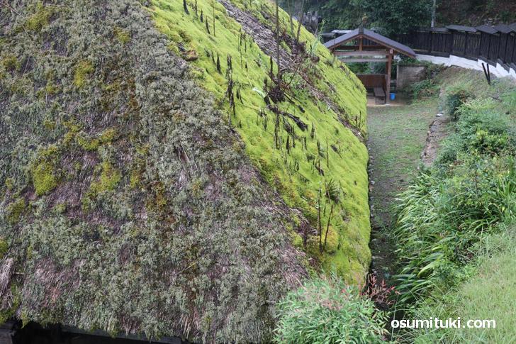 苔のようなものも生えており、屋根は緑色になっている部分もありました