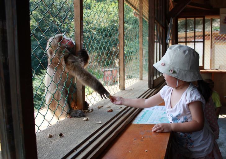サルと触れ合える嵐山モンキーパークをレジェンド女芸人がレポート