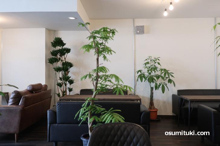 観葉植物とクラシックソファで洒落た雰囲気