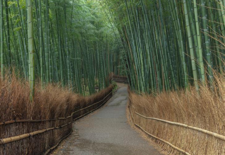 竹林の小径、嵐山のSNS映えスポットですがそこは嵐山ではありません