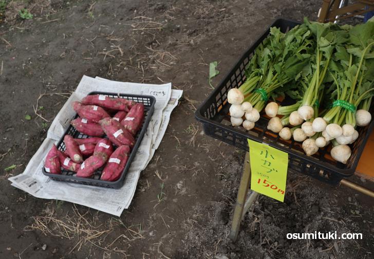 畑で採れた野菜をその場で販売(くらしゴトLabo)
