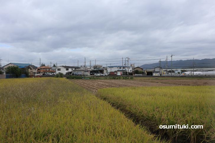 京都府宇治市槙島町の風景、畑と田んぼが多いです