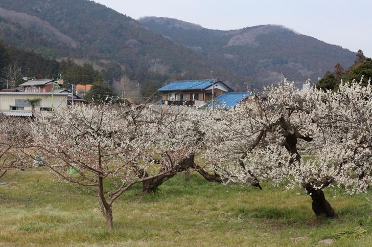 越生梅林から徒歩20分の集落にある「パン工房マルピエ」が『人生の楽園』で紹介