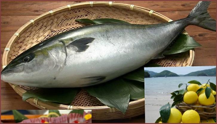 平戸なつ香ブリ(坂野水産)が『満天☆青空レストラン』で紹介