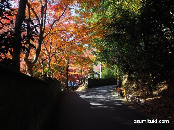 吟松寺の紅葉(2020年11月18日撮影)