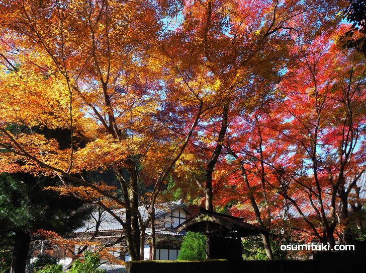 陰と陽の紅葉が撮影できます(吟松寺)