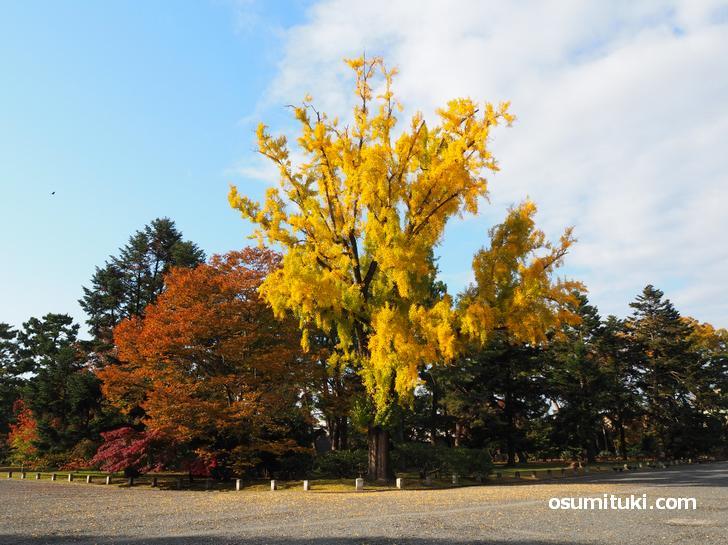 京都御苑の紅葉(2020年11月11日撮影)