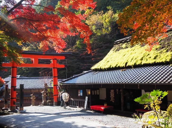 嵯峨鳥居本の紅葉(2020年11月14日撮影)