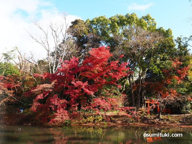京都府立植物園の紅葉(2020年11月21日撮影)