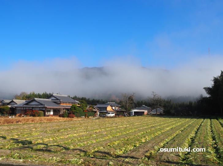 亀岡の雲海(2020年12月7日の早朝撮影)