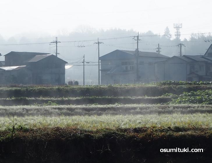 畑から水蒸気が大量に噴き出ていました(京都府亀岡市)