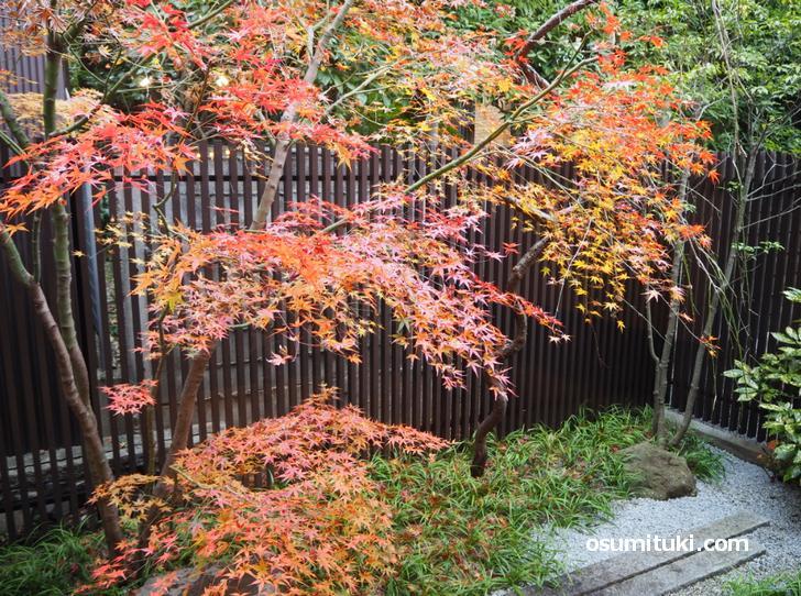 奥には京都らしい坪庭があります(御所 DeLino)